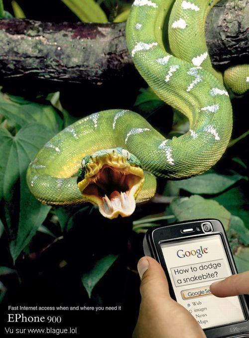blague-animaux-serpent-google