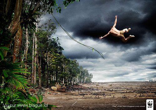 blague-divers-tarzan-deforestation