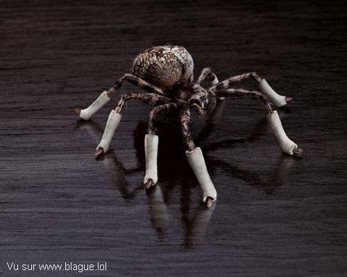 blague-animaux-araignee-platre