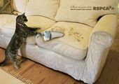 blague-animaux-chat-aspirateur