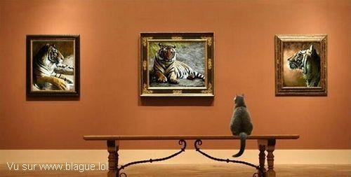 blague-animaux-chat-dans-galerie-d-art