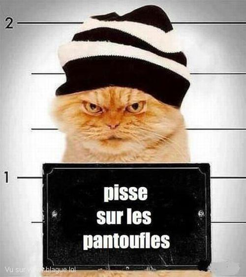 blague-animaux-chat-delinquant