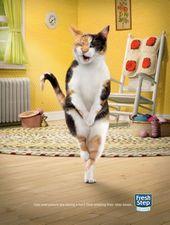 blague-animaux-chat-douleur