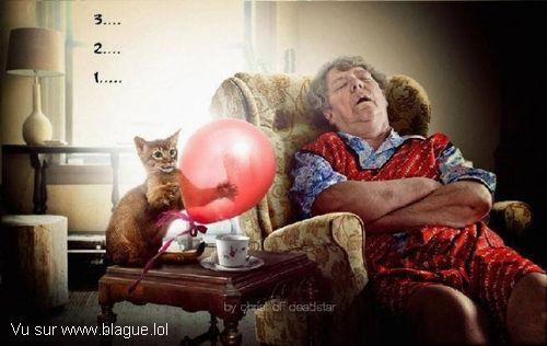 blague-animaux-chat-eclate-ballon