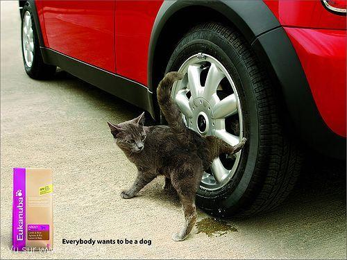 blague-animaux-chat-voiture