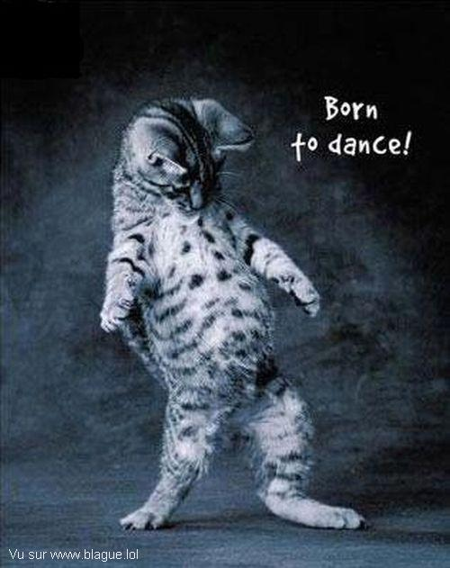 blague-animaux-chatton-born-to-dance