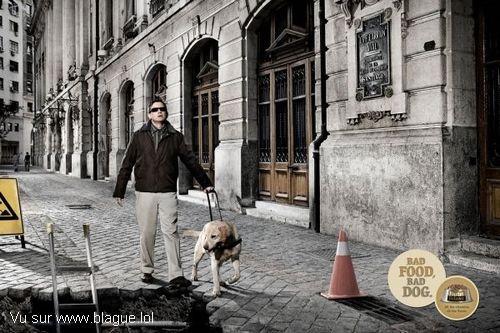 blague-animaux-chien-aveugle-maladroit