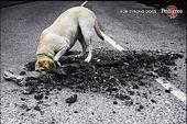 blague-animaux-chien-cache-os-creusant-route