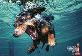 blague-animaux-chien-dans-l-eau-2
