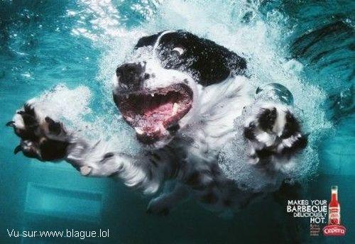 blague-animaux-chien-dans-l-eau