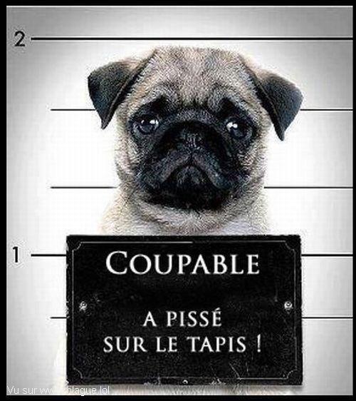 blague-animaux-chien-delinquant