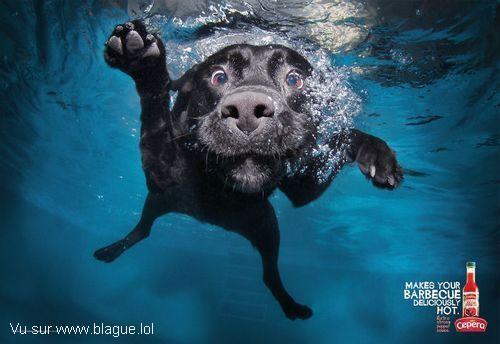 blague-animaux-chien-eau-piment