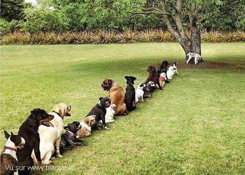 blague-animaux-chien-file-attente
