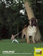 blague-animaux-chien-geant-arbre