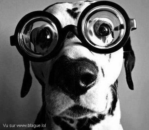 blague-animaux-chien-lunette