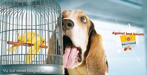 blague-animaux-chien-oiseau-haleine