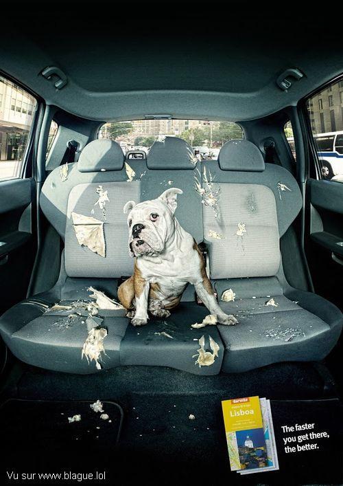 blague-animaux-chien-sacage-voiture