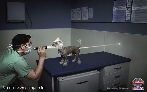 blague-animaux-chien-veterinaire