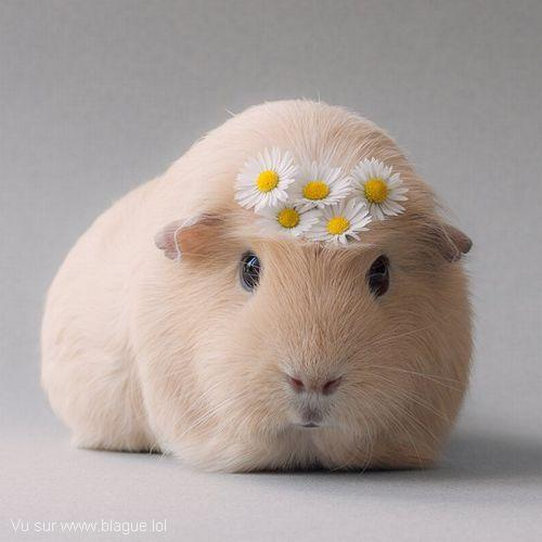 blague-animaux-cochon-dinde-fleur