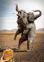 blague-animaux-elephant