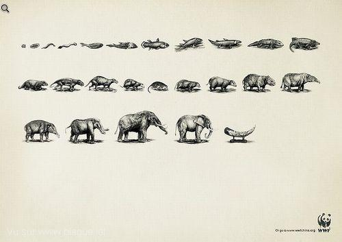 blague-animaux-evolution-elephant-tue