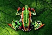 blague-animaux-femme-peinture-grenouille