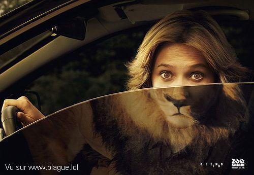 blague-animaux-femme-reflet-lion