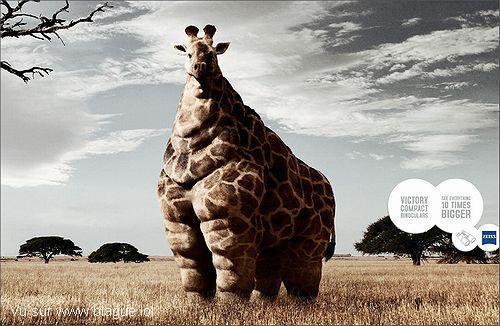blague-animaux-girafe-grosse