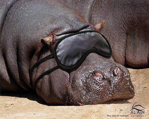 blague-animaux-hipopotame-dormir