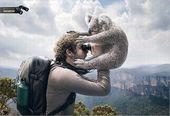 blague-animaux-koala-jumelle