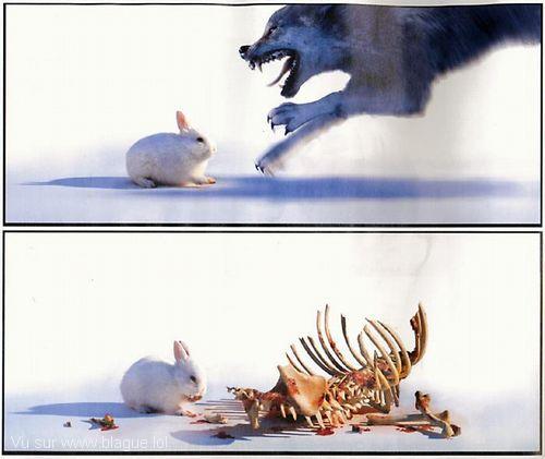 blague-animaux-lapin-versus-loup