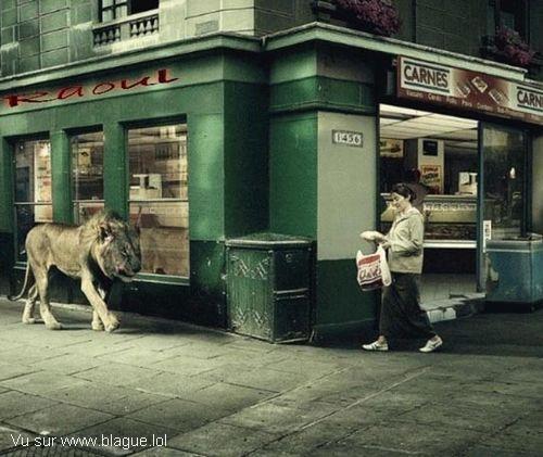 blague-animaux-lion-dans-ville