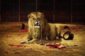 blague-animaux-lion-mange-dompteur
