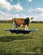 blague-animaux-milkshake-vache-tranpoling
