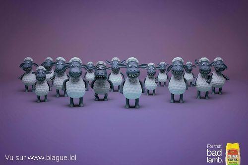 blague-animaux-moutons-contre-attaque