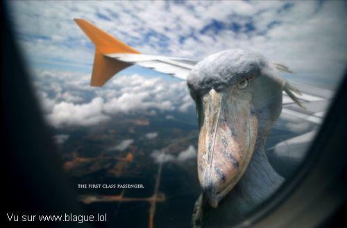 blague-animaux-oiseau-aile-avion