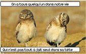 blague-animaux-oiseau-fou