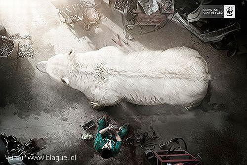 blague-animaux-ours