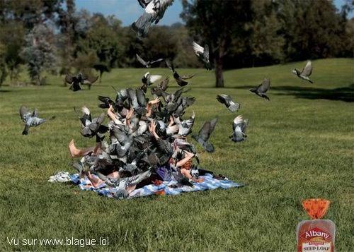 blague-animaux-pique-nique-oiseaux