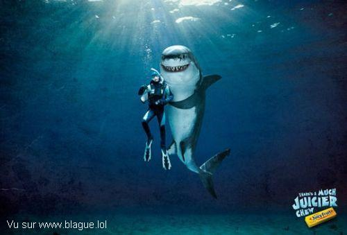 blague-animaux-plongeur-requin