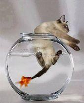 blague-animaux-poisson-attrape-un-chat