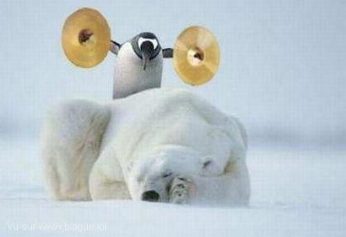 blague-animaux-reveil-en-fanfare