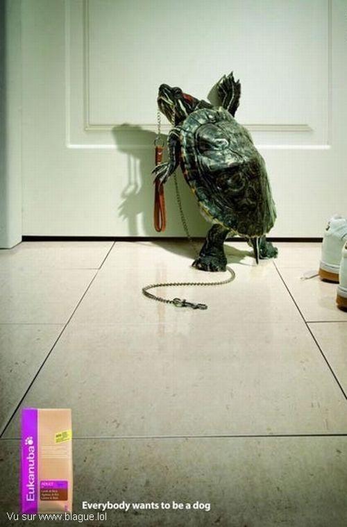 blague-animaux-sortir-promener-la-tortue