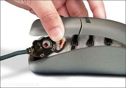 blague-animaux-souris-ordinateur