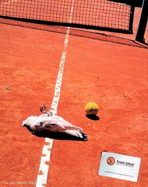 blague-animaux-tennis-oiseau-mort