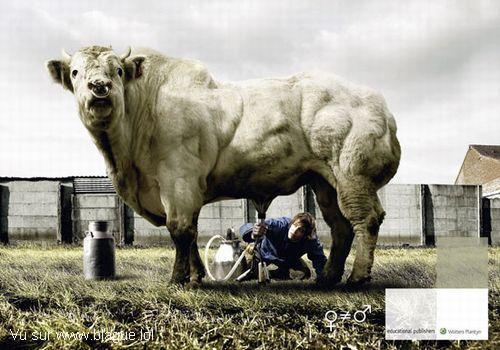 blague-animaux-traiter-taureau