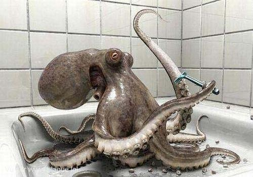 blague-animaux-une-pieuvre-se-rase