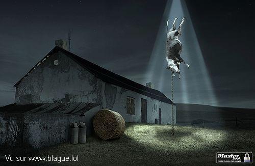blague-animaux-vache-extraterrestre