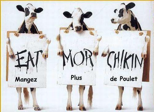 blague-animaux-vache-manifestation