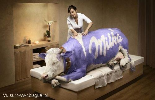 blague-animaux-vache-milka-massage